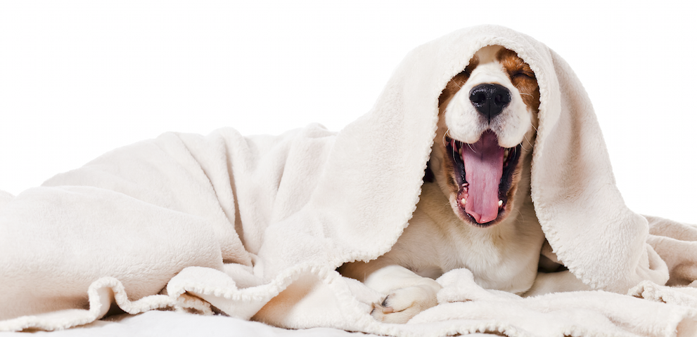 How To Put A Dog To Sleep Home Remedies